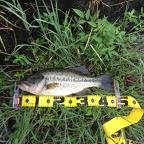 7july【Jackson協賛】大会(琵琶湖)の釣果