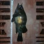 7nana【mebaru】大会の釣果