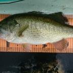 KAESU大会(琵琶湖)の釣果