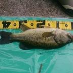 KAESU大会(中国四国)の釣果