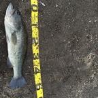 KAESU大会(九州沖縄)の釣果