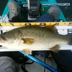 loco大会【ボート、フローター限定】琵琶湖の釣果
