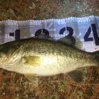 MOMOIフィッシング(琵琶湖)の釣果