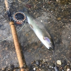 一魚一会の魚拓大会の釣果