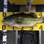 6roku【4社協賛】大会(琵琶湖)の釣果
