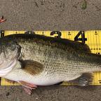 【KAESU】トランキル 2019の釣果