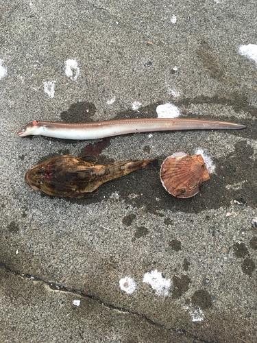 マアナゴの釣果
