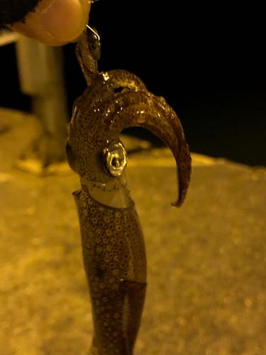 チイチイイカの釣果