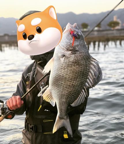 キビレの釣果