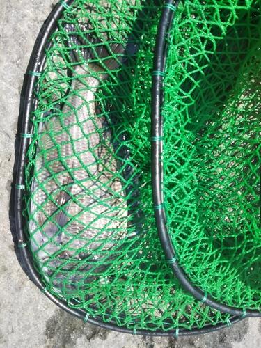 若洲海浜公園海釣り施設