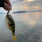 🔰魚に餌あげ隊🔰の釣果