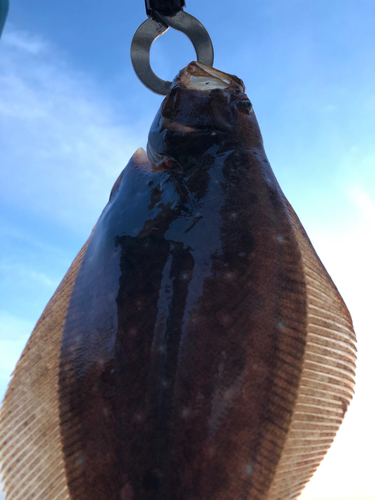 ソゲの釣果