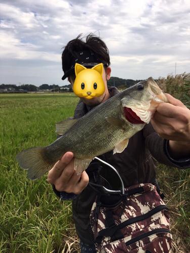ブラックバスの釣果