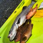 滋賀フィッシングファースト 釣具屋店員の釣果