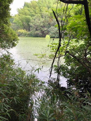 知多半島野池群