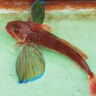 九州 釣斗の釣果