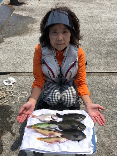 ギザミの釣果