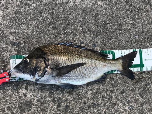 お魚センター前笠柄の波止
