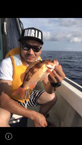 オキメバルの釣果