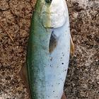 魚亀の釣果