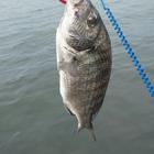 暇があれば釣り人の釣果