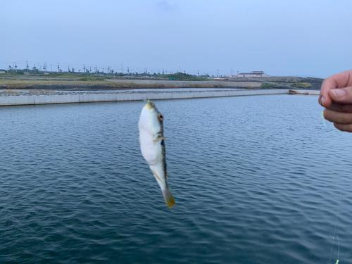 新富津漁港