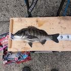 チヌ釣り師タカの釣果