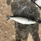 S.渡辺の釣果