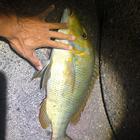 釣りパラダイスの釣果