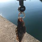 釣りヨクタの釣果