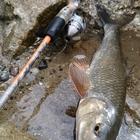 釣りキチ七平の釣果