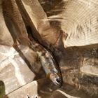 シュウ035の釣果