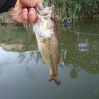 47nobuの釣果