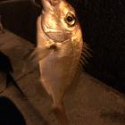 釣り中毒者の釣果