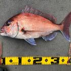 Hiroshi0206の釣果