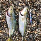 釣り日和の釣果