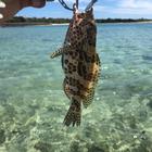 玉久『小さな魚人』の釣果