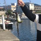 PEKOの釣果