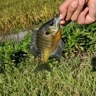 海釣りをしたい人の釣果