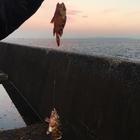 釣り好き 初級の釣果