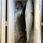 へっぽこ釣り師の釣果