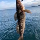 釣りに夢中人の釣果