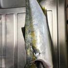エギングマスターヒロシの釣果