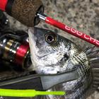 鮎川魚 紳三の釣果
