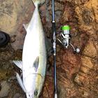 日本海山陰アングラーの釣果