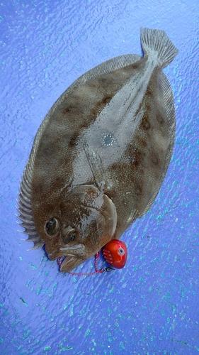 ガンゾウビラメの釣果