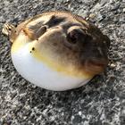 凪貝の釣果