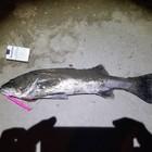 女の子は釣れる魚は釣れないの釣果