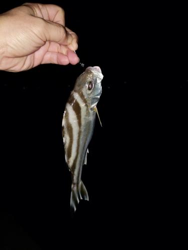 クワガナーの釣果