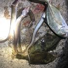 R0109 生物ハンターの釣果